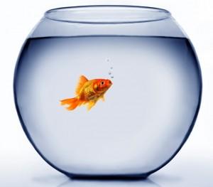 poisson dans un bocal